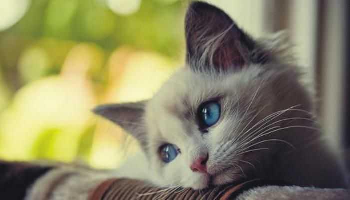 القطط فى الحلم